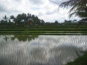 Social Visa for Bali | Sosial Budaya