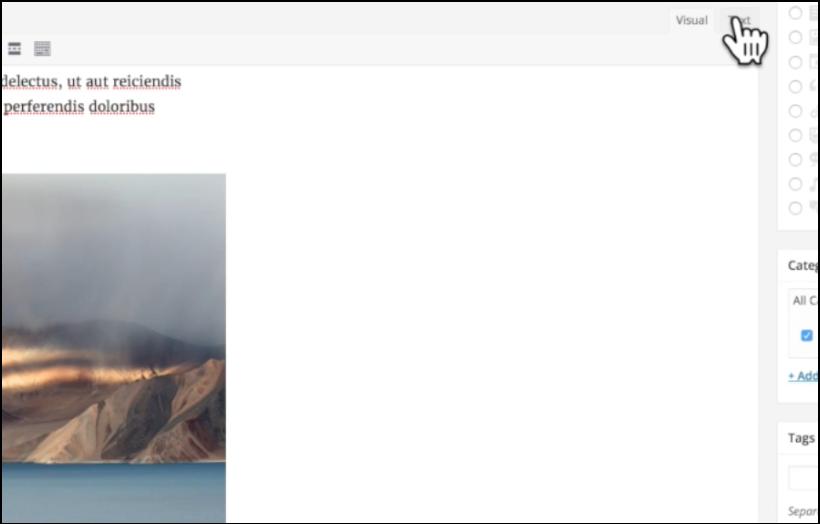 visual and text editors wordpress